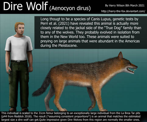 Dire Wolf Size
