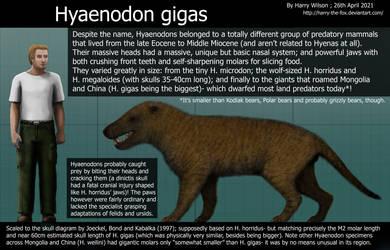 Hyaenodon gigas Size