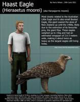 Haast Eagle Size