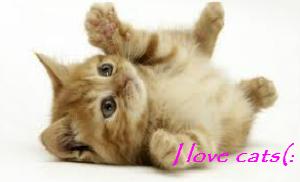 I love Cats ^^ by XmadlyinloveX