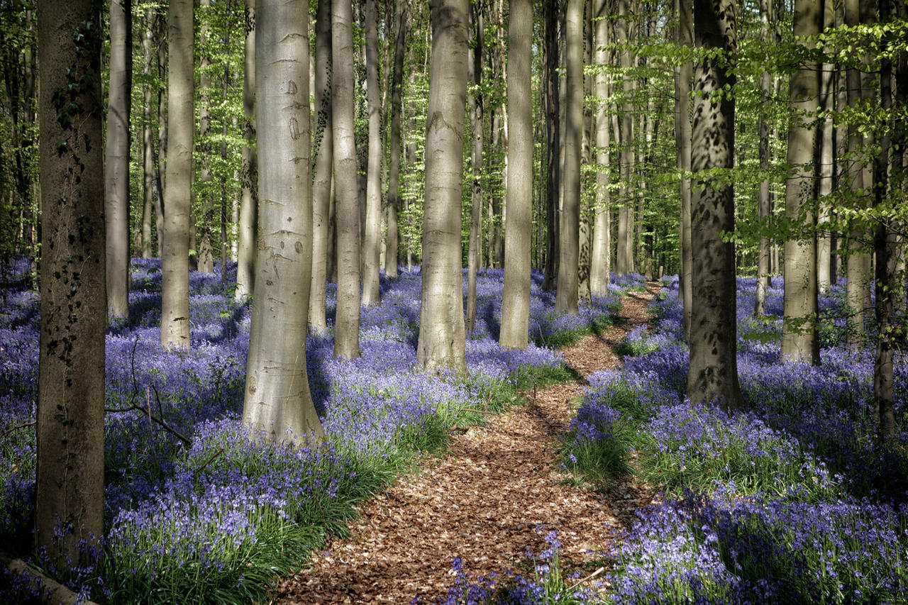 The blue forest 2 by rhipster