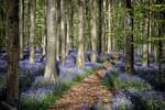 The blue forest 2