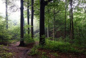 the little wood behind my house by rhipster