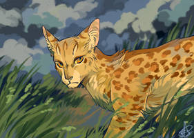 Leopardstar by SsilverBeeze
