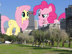 Pinkie's plan for the tinies