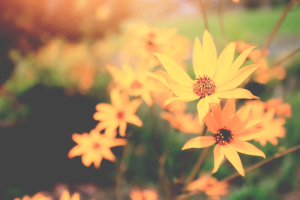 Flower Beautiful by Jrphotography44