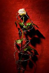 Spiky Rose by Spikylein