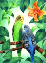 Cute Budgies by Spikylein
