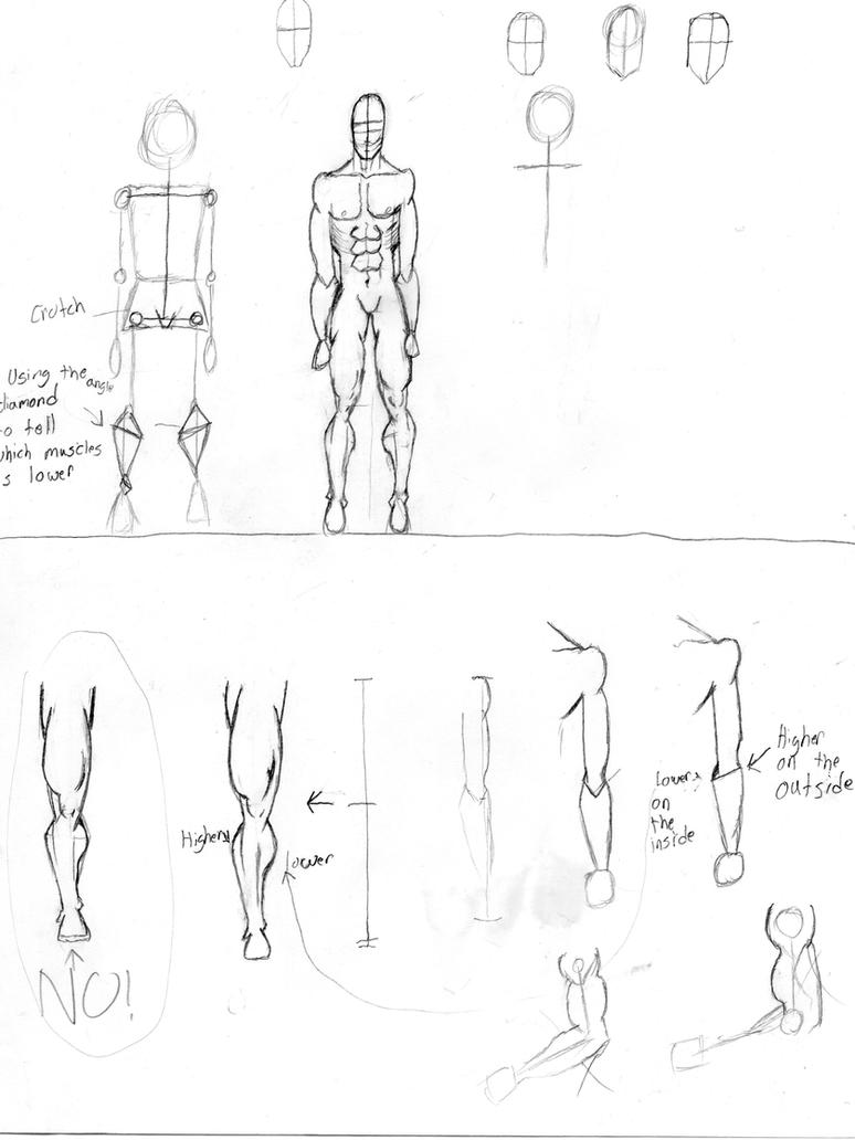 Male Anatomy Legs Arm And Body Front View By Freshbreath3 On