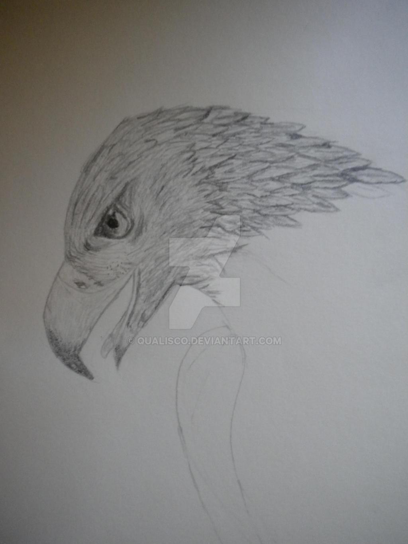 Aigle royal by qualisco on deviantart - Comment dessiner un aigle royal ...