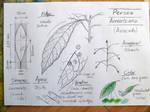 Avocado leaf by fabianfucci