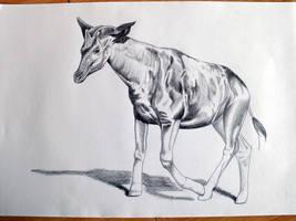 Okapi (with stripes removed)