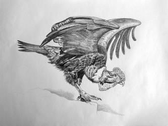 Andean condor by fabianfucci