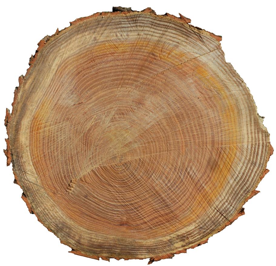 Cut Wood Logs ~ Log end by brianhanson nd on deviantart