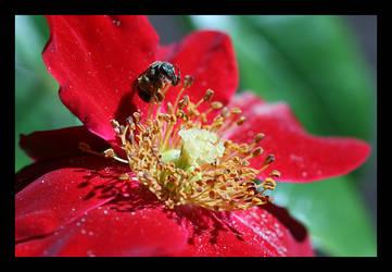 Velvet and Nectar by complineBelle