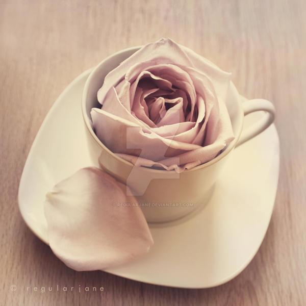 Warm Cup of Rose by regularjane