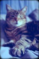 Tigresse I by LeScripte