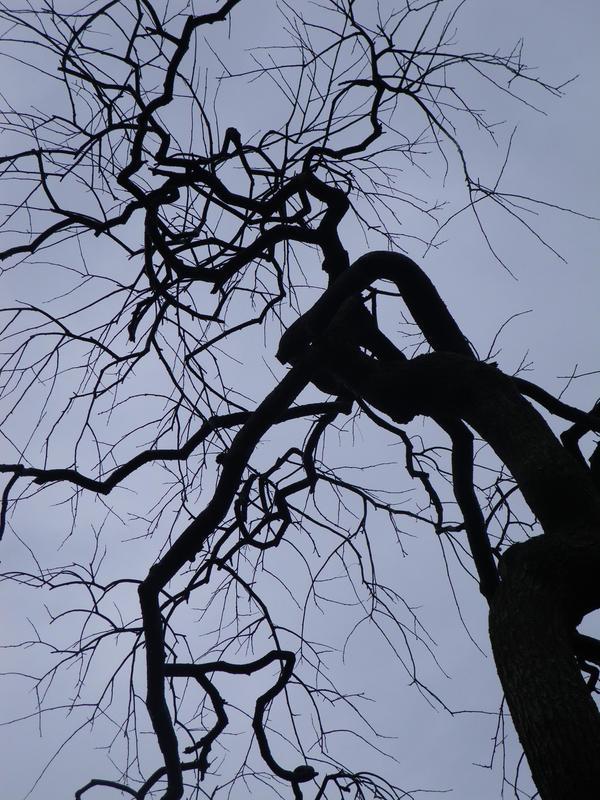 ghost tree :::Japan No.02::: by KizUna-Cat