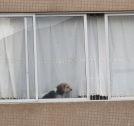 Window Dog by ERICA29091999