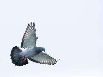 Flying by vlad042