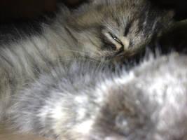 catssss by yoosh