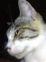 kucing by yoosh