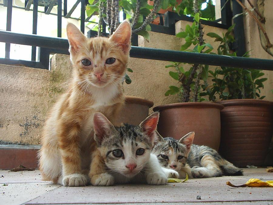kittens by yoosh