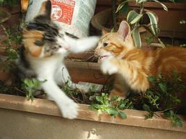 kitten fight by yoosh