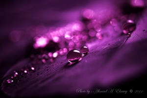 violet dream by pharaohking