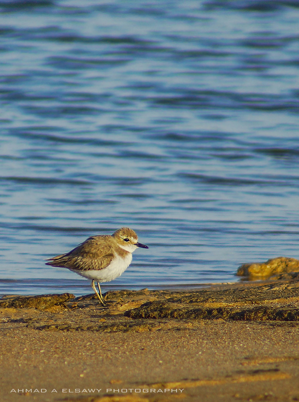 Morning Bird by pharaohking