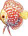 Discus Pixel by Lith-FireCracker