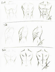 Torso Tutorial by Juacamo