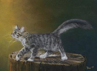 Cat on Wood