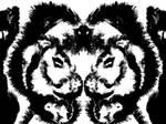 savannah cat(s)