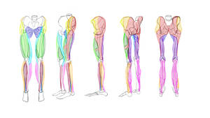 Lower torso muscles practise