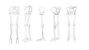 Lower torso skeleton practise
