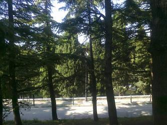 Park in Trieste by janedmcgeneric