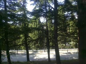 Park in Trieste