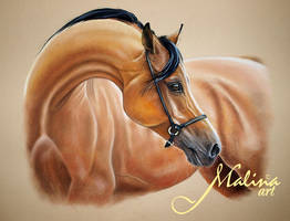 Horse by Malina-art
