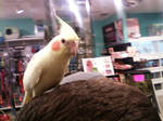 Getting the BIRD