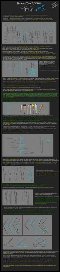 Leg Anatomy Tutorial (Version 2)