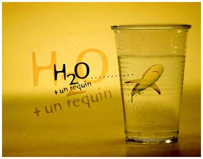 H2O + un requin by djgruny
