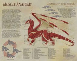 Dragon Anatomy - Muscle by UberKudzu