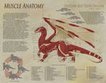 Dragon Anatomy - Muscle