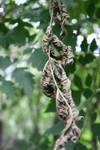 Dried leafs :c