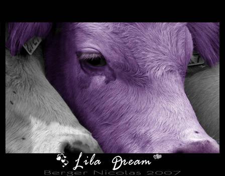 Lila Dream