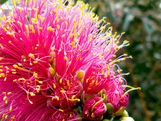 ::Pink Brush::