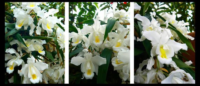 ::3D Orchids::