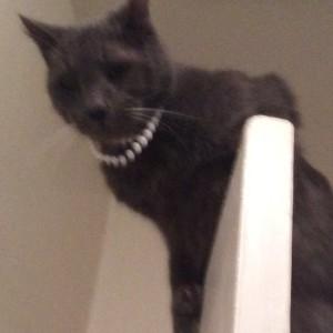 CatBunnie's Profile Picture