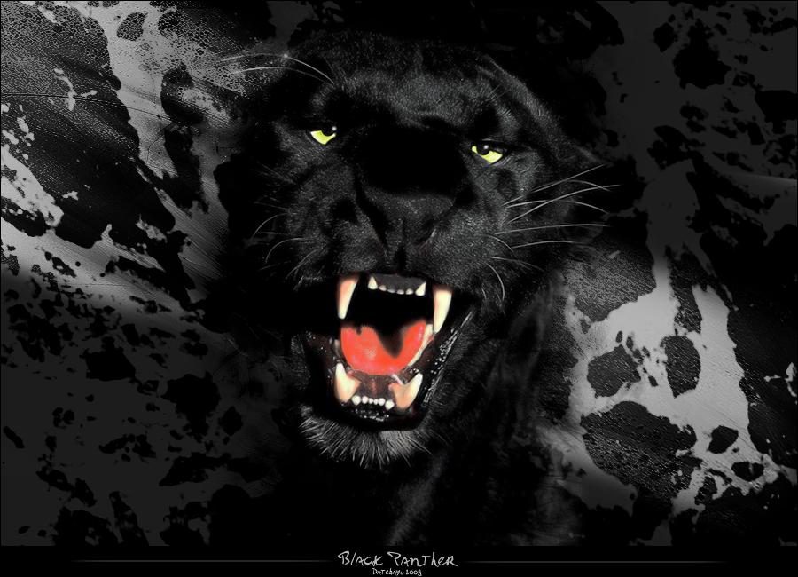 Black Panther by Kishintora
